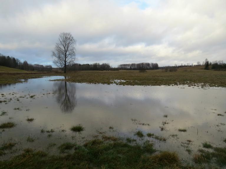 9. decembris. Ielejas pļavās izveidojušās lielas ūdens lāmas.