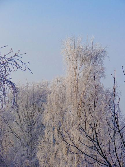 Auksta ziema un sarma (Janvāris)
