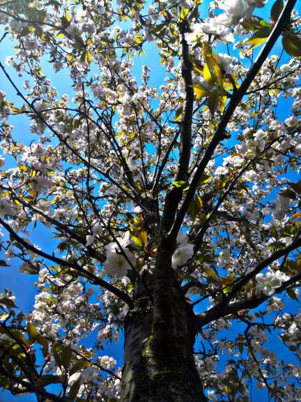 Ziedošais un plaukstošais Aprīlis