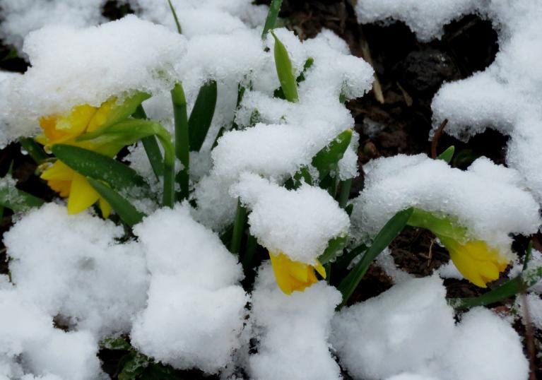 Aprīļa agro veģetāciju ik pa laikam bremzēja sniegs, kuru jau nu pavisam vairs nevajadzēja.
