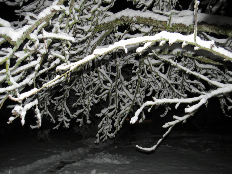 30. novembra naktī izveidojās 10 cm bieza sniega sega.