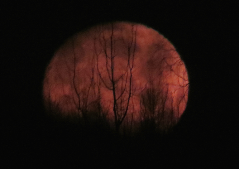 9. janvāra rīts, aiz kokiem noriet apaļš mēness.