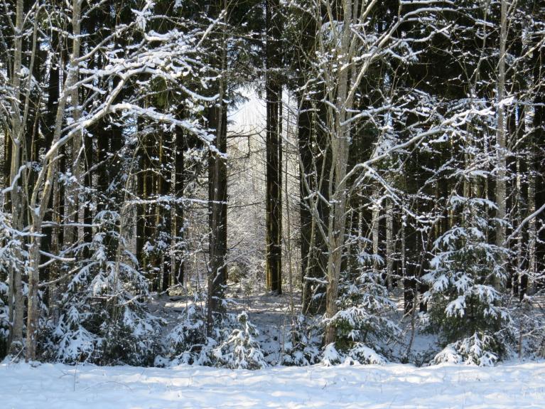 Mežā ir brīnumskaisti, šogad tādu skatu nav bijis daudz.