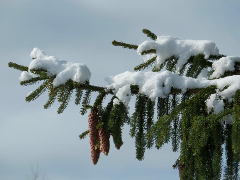 Marta ziema turpinās, baudīsim to, kamēr varam.