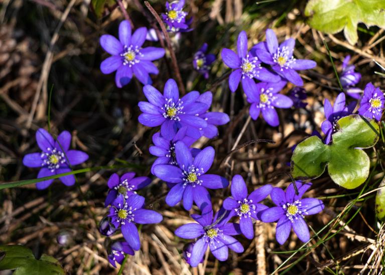 Lai visiem veiksmīgs un veselības pilns pavasaris!