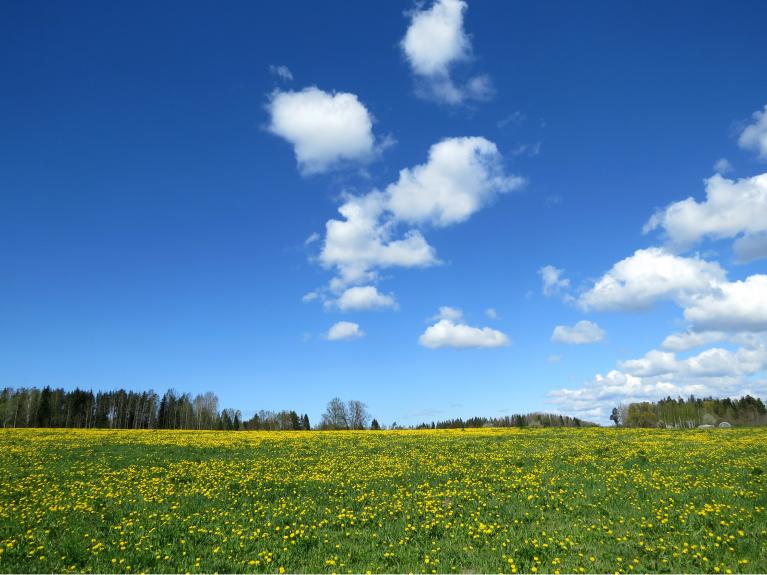 Lai arī maijs ieradās ar ziedošām pieneņu pļavām, atsevišķi rīti bija ļoti auksti. Atceros, ka šo skaisto pļavu fotografēju aukstā ziemeļpuses vējā.