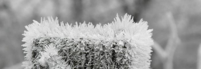 Gaidot ziemīgas noskaņas