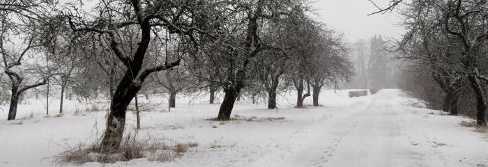 Pamazām atgriežas ziema