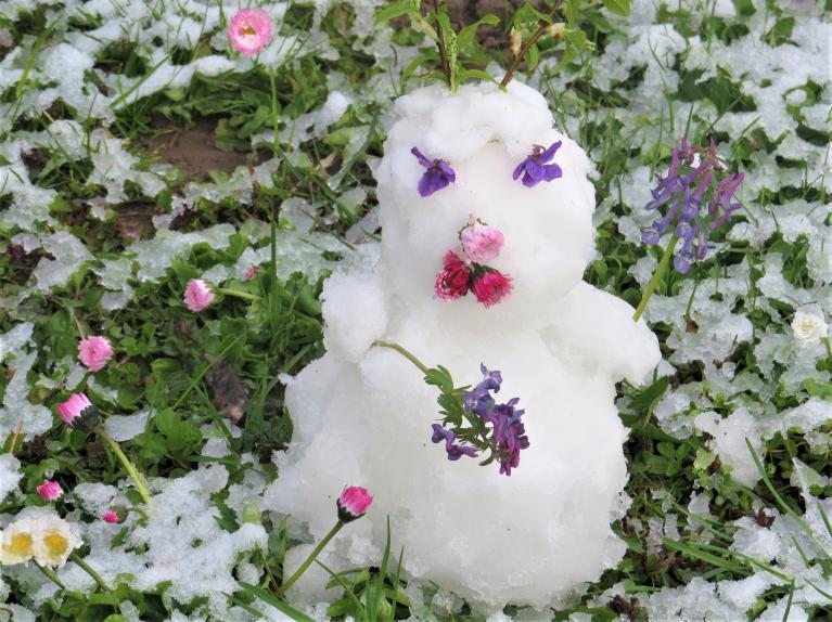 26.aprīļa sniegavīriņš. Vai šopavasar pēdējais?
