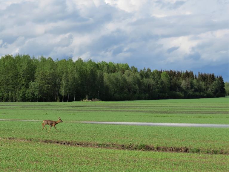Ūdens lāmas arī labības laukos.