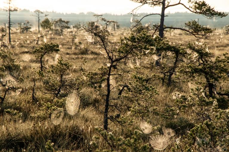 Kā arī necilā izmēra priedes, bērzi un citi koki