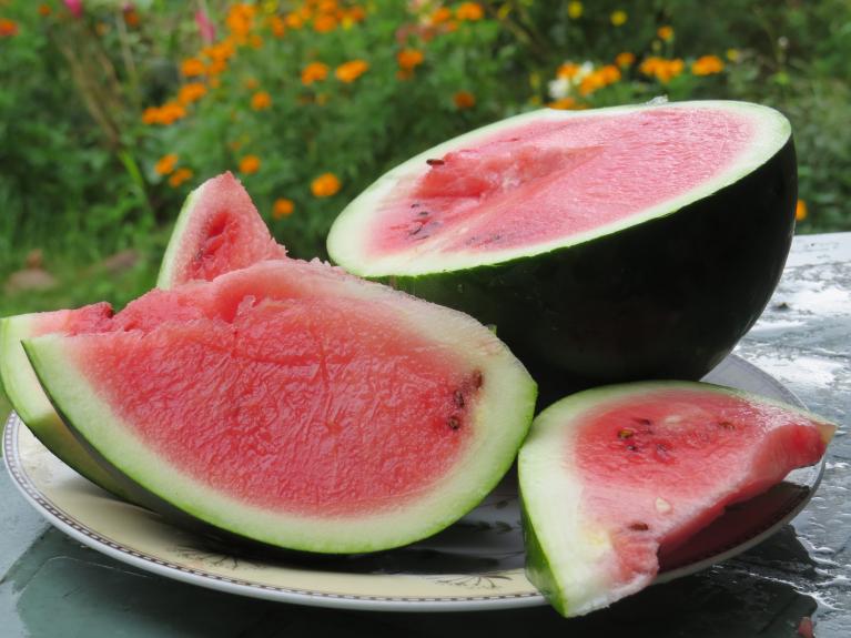 Mans uz lauka audzētais arbūzs. Karstie vasaras mēneši augam ir  patikuši- arbūzs salds un sulīgs.