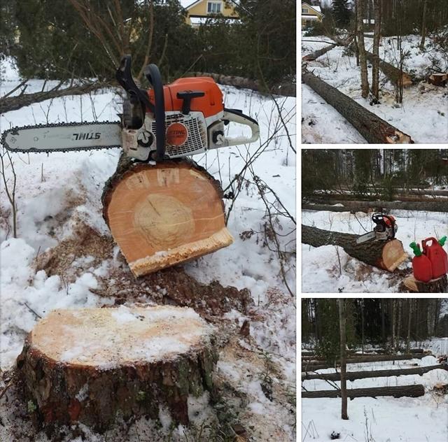 Puun Kaataminen Ajankohta