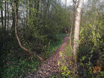 Kevät metsässä