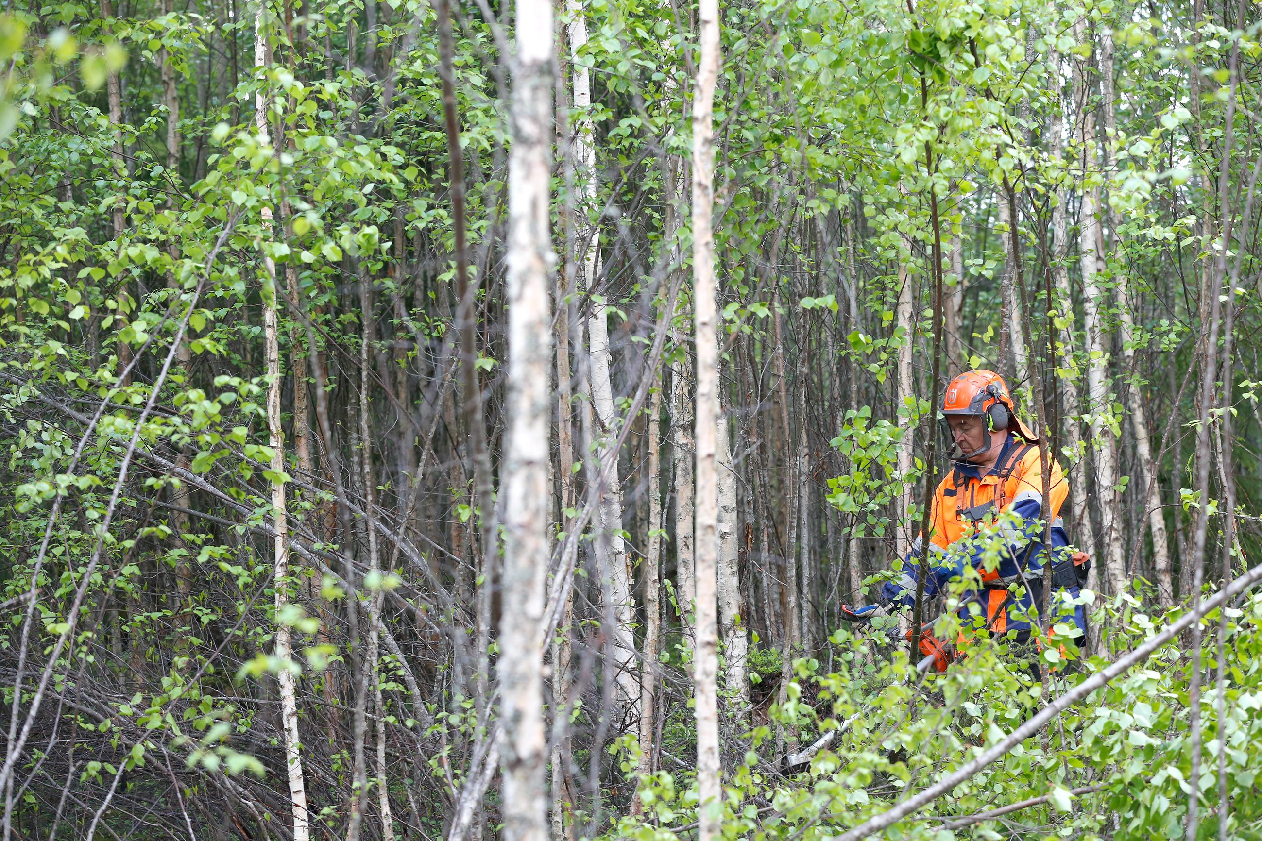 Nuoren Metsän Hoito Tiheys