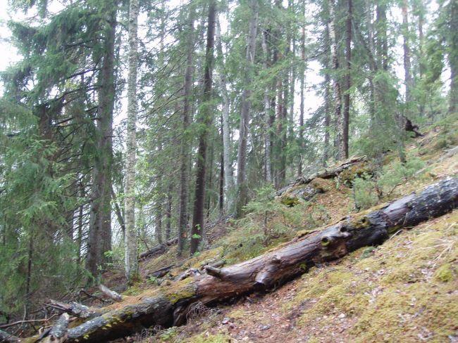 Metsän Kasvu M3/Ha