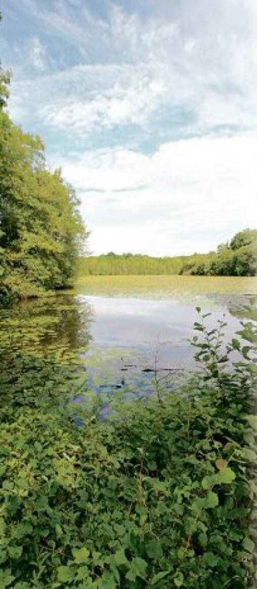 l'Écho touristique - L'étang des panses
