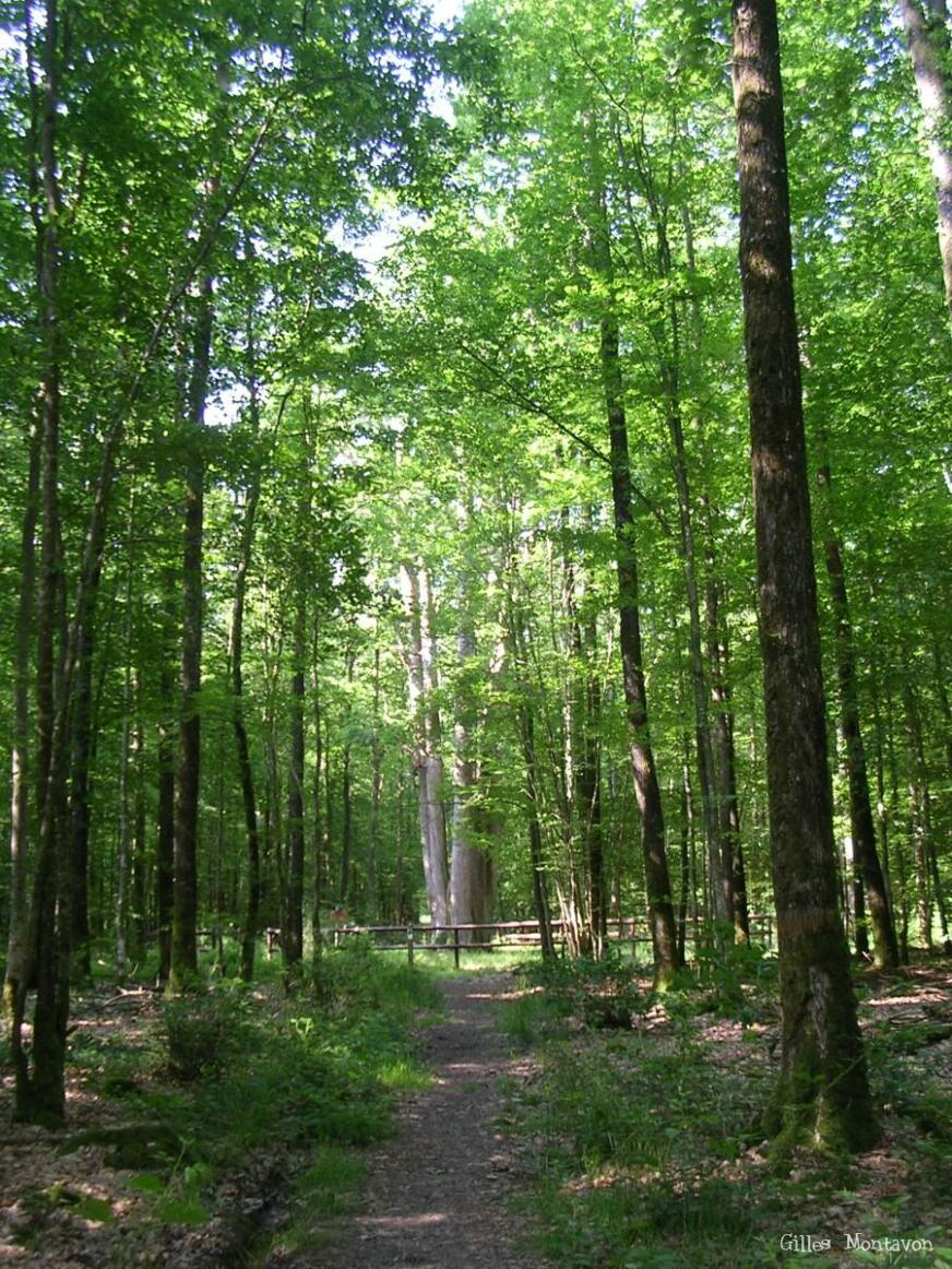 Patrick Forget - Forêt de Senonches