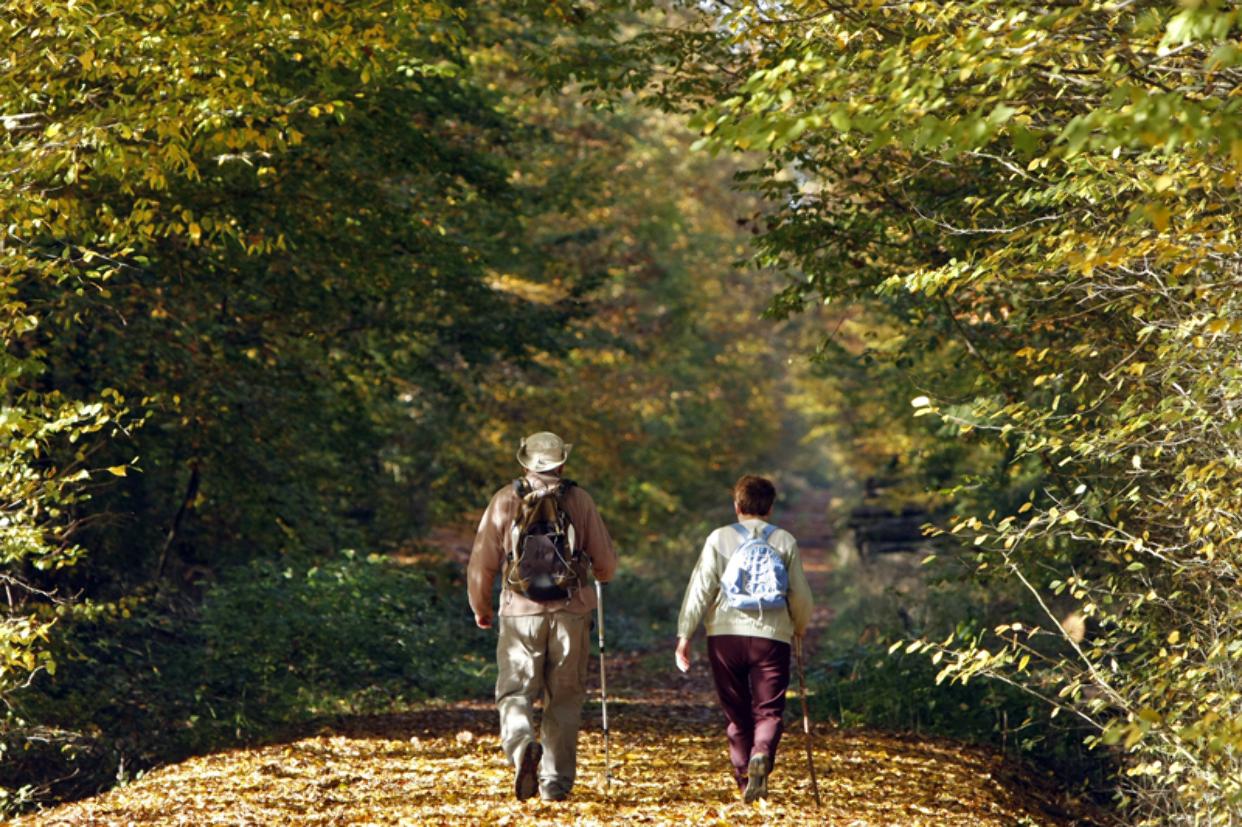 Patrick FORGET - www.sagaphoto.com - Forêt et étangs de Senonches