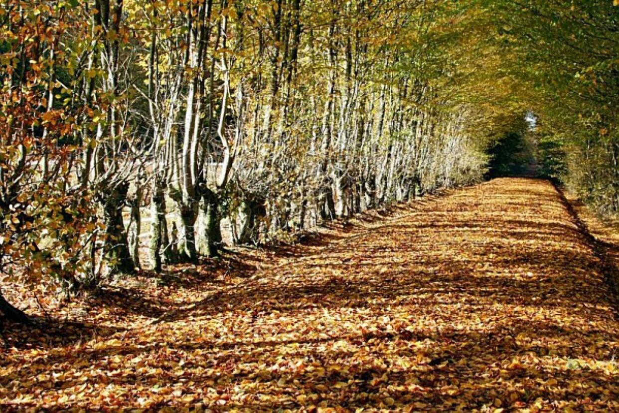 Patrick Forget - Forêt de Senonches, étangs et fôret