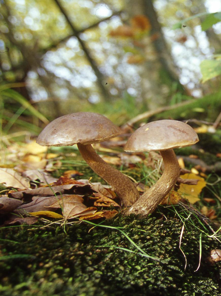 © Patrick FORGET - www.sagaphoto.com - Forêt domaniale de Senonches - les horizons de la vallée de l'Eure