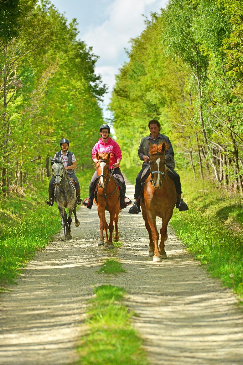Joël DAMASE - ADRT 28 - Equitation