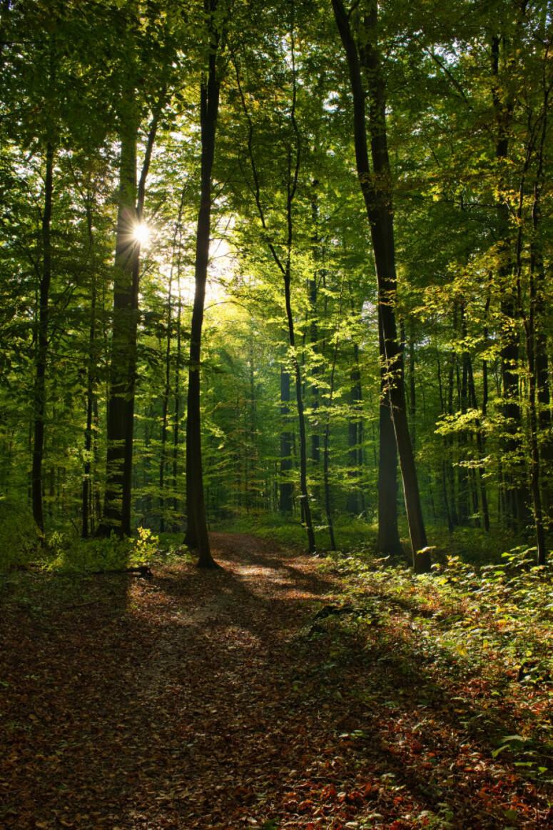 Freepick - Forêt de Senonches Portrait