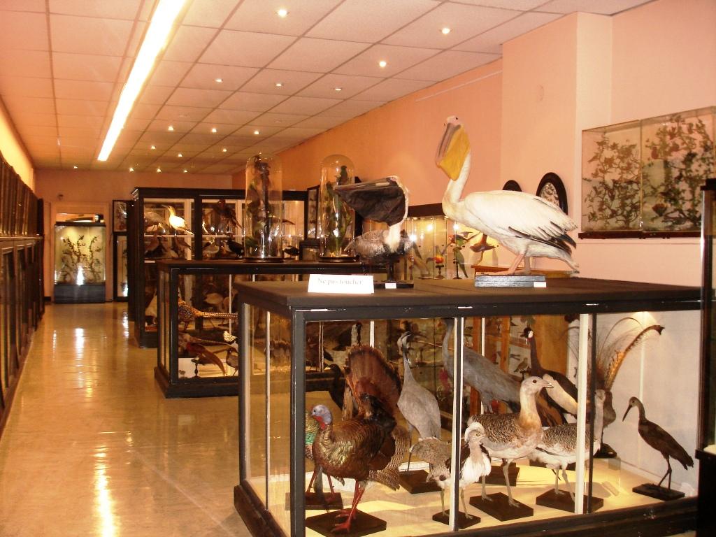 Musée des beaux-arts et d'histoire naturelle de Châteaudun - Musée des beaux-arts et d'histoire naturelle de Châteaudun