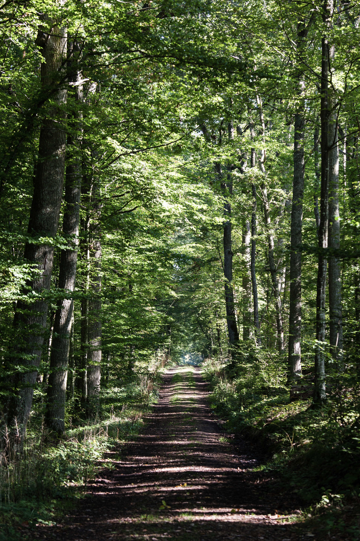 CDT 28 - Forêt domaniale de Dreux