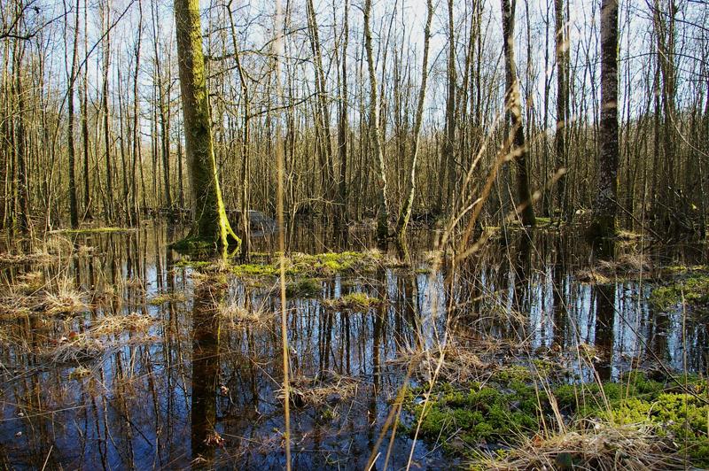 CDT 28 - Forêt humide des Mousseuses