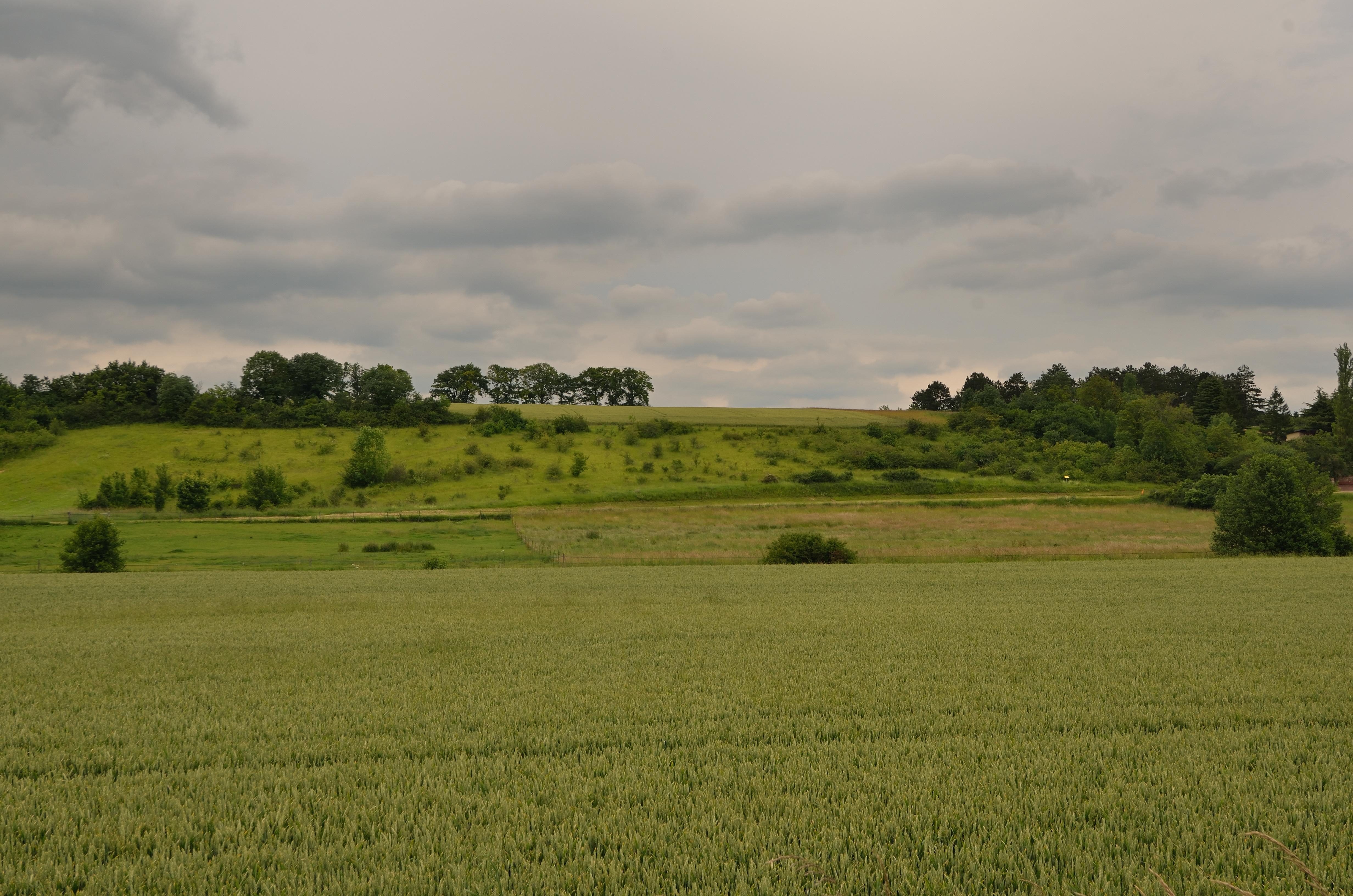 Cen CVL / F. Hergott - Les pelouses de Bonville