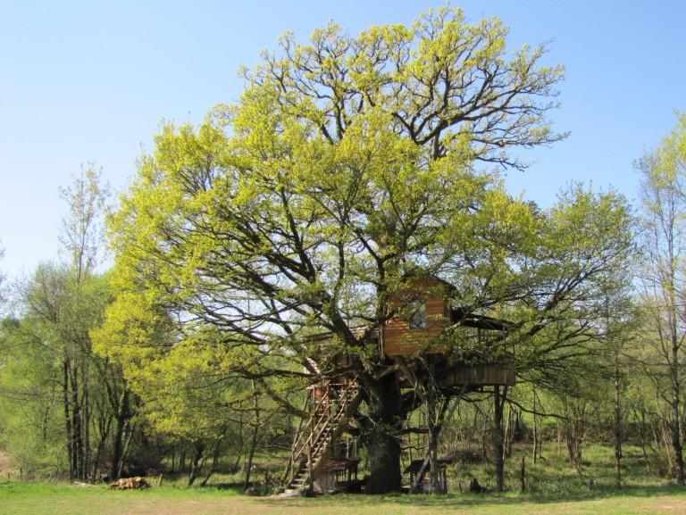 Cabane_dans_les_arbres.jpg