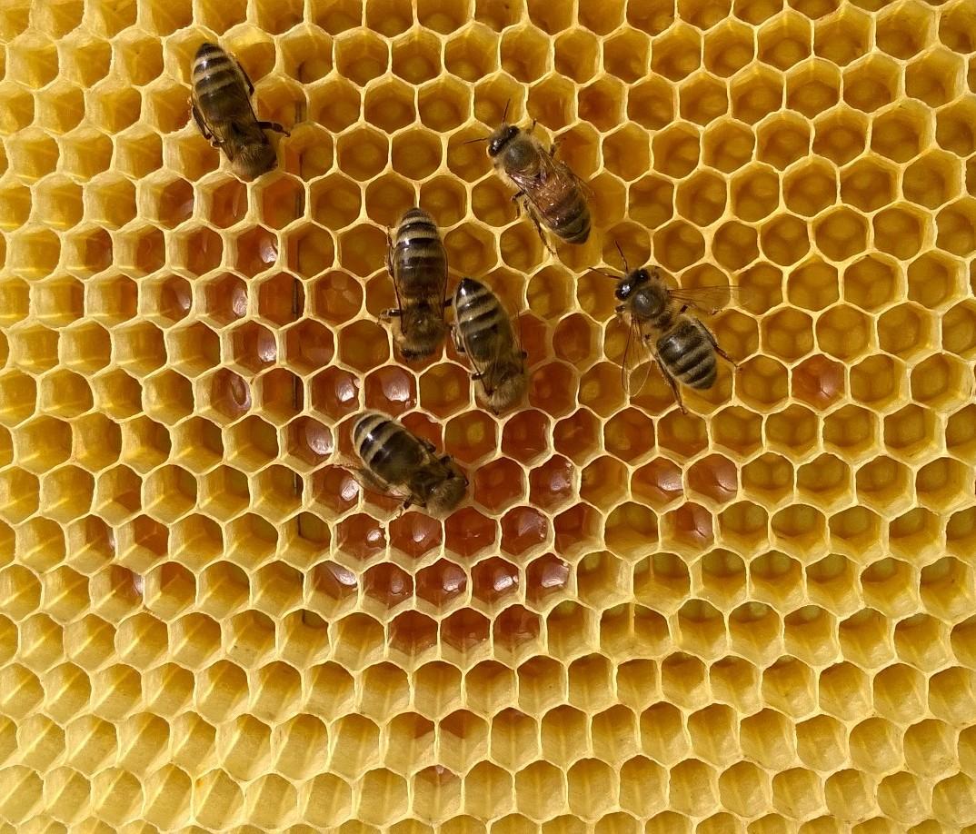miimosa parrainez une ruche pendant 1 an miimosa. Black Bedroom Furniture Sets. Home Design Ideas