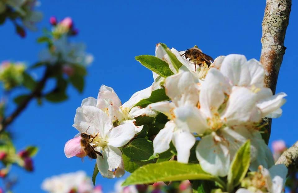 Fleurs_butinées_1.jpg