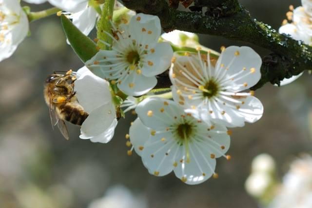 Fleurs_butinées.jpg