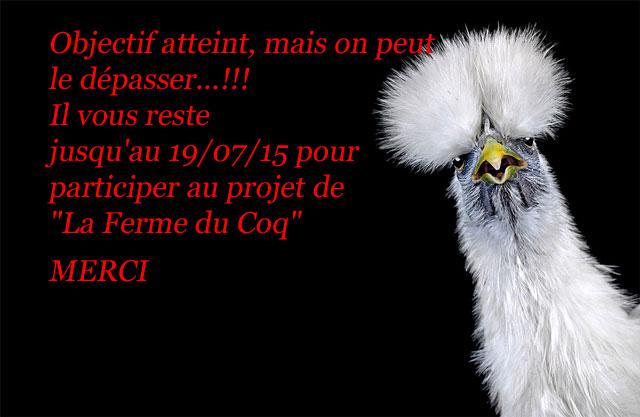 portrait-poule-goh0.m.jpg