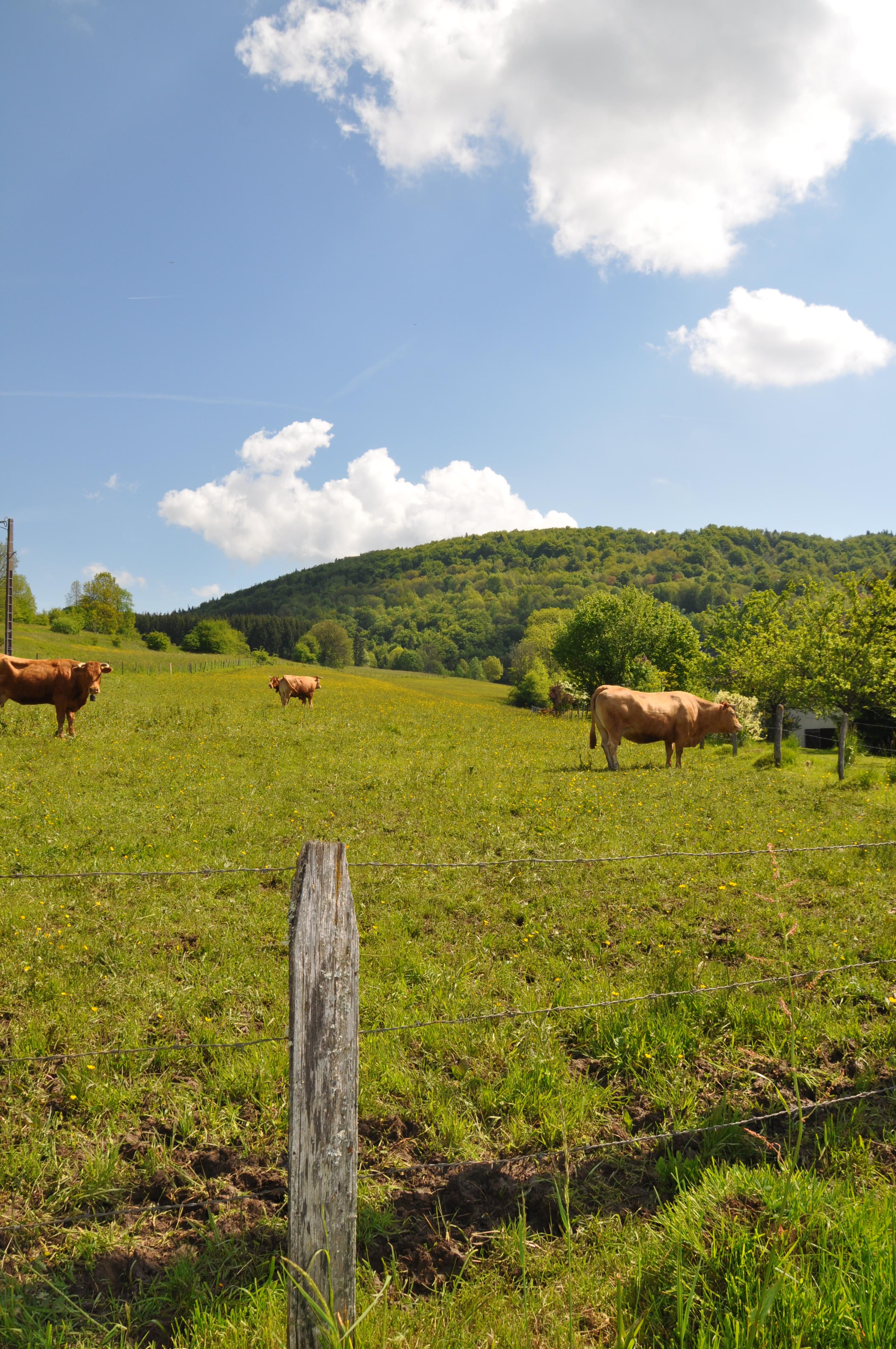 paysage_agri_V_LeBret.JPG