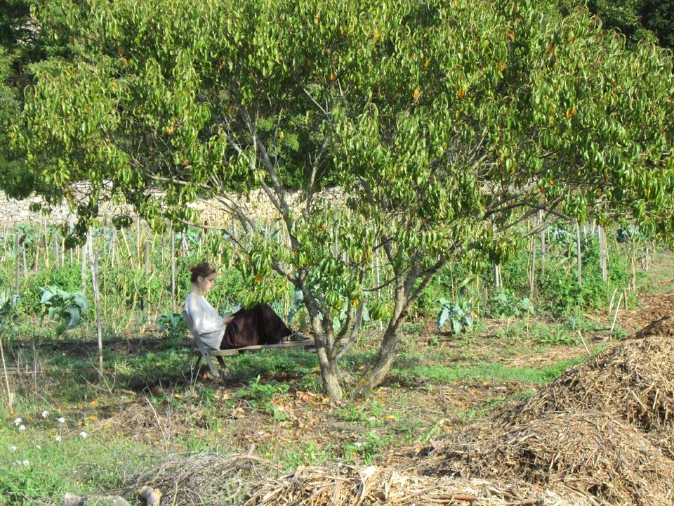 aurelia-arbre-bd.jpg