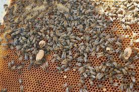 cadre_abeilles.jpeg
