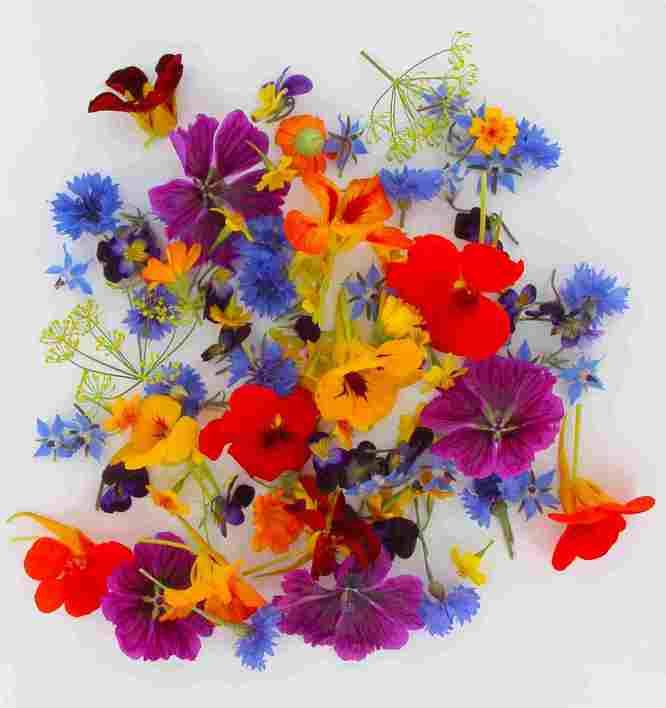 mélange_de_fleurs_comestibles.JPG
