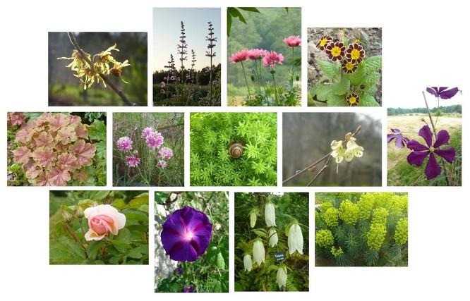 Mosaique_plantes.jpg