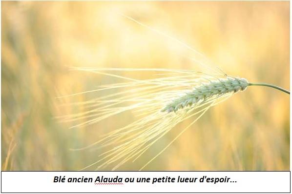 alauda_espoir.jpg