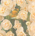 clip_image001(114).png