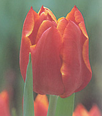 clip_image001(157).png
