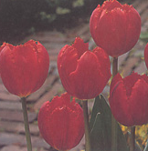 clip_image001(166).png