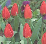 clip_image001(175).png