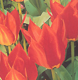 clip_image001(194).png
