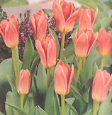clip_image001(199).png