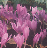 clip_image001(20).png