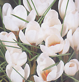 clip_image001(22).png
